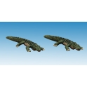 North Star AA16 Crocodiles nains (2)