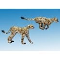 North Star AA01 Cheetahs